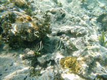 Leider ist das Korallenriff in schlechten Zustand.