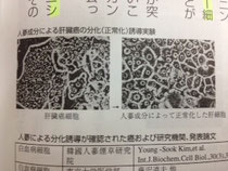ガン細胞の正常化細胞誘導