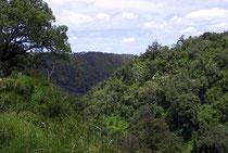 Antica Foresta Mau