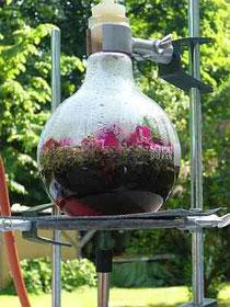 Destillation von Lavendel-, Holunder- und Rosenblüten