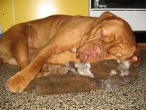 Schlaf gut Yuma !