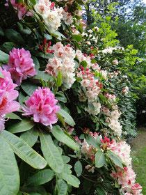 Blütenwand