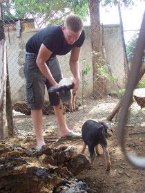 Die 2 Schweinchen und ich