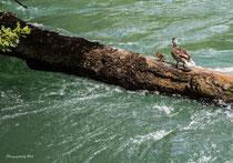 Glückliche Landung auf dem Baum