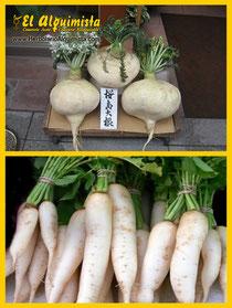 Daikon Tipos de corte e ingredientes en la Cocina Japonesa - Herbolario El Alquimista Arrecife Lanzarote