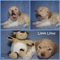 Lieve Linus