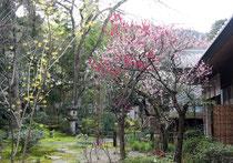 サガノ・サンガの花木