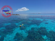 Snorkeling PUFANA