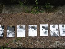 Ausstellung der Lochkamerabilder