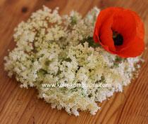Fleurs de sureau Elderflower