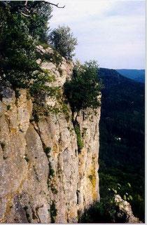 Die rötlichen Rosetten von S. tectorum wachsen im oberen Bereich der senkrechten Wand