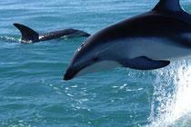 Und Delfine helfen auch dabei