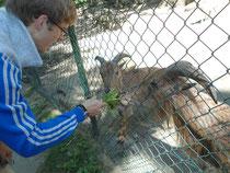 Ich erstelle auch Ernährungspläne für Tiere ;-)