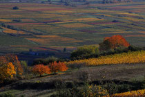 Herbst im Rheintal