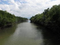 Mangrove forest Ranong province
