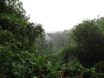 Forest view in Sai Yok, Kanchanaburi province