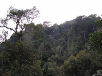 Rainforest in Phato,Chumphon Province