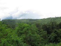 Phu Pan NP, Sakon Nakhon province, Thailand
