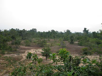 Dry forest with sandy area in Surin province
