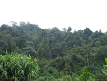Rainforest near Chanthaburi