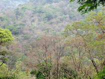 Forest view in Phu Pan, Sakon Nakhon province