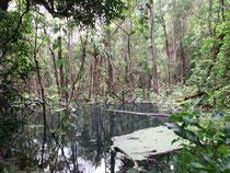 Swamp forest near Thung Yai Kanchanaburi province