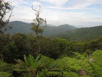 Mountain view in Ron Phibun, Nakhon Si Thammarat province