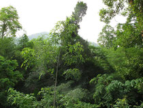 Forest near Ban Louang, Nan province