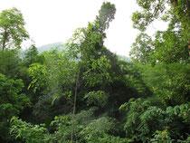 Forest near Ban Louang, Nan province
