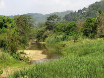 River and Forest view near Phato, Chumphon Province
