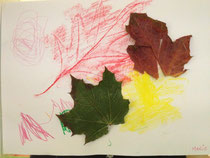Blätter von Lisanne