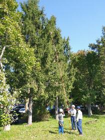 「森林官」の体験。木の高さを測ります。