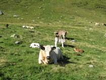 Lampertschalp: 1 Woche vor Ende der Alpzeit