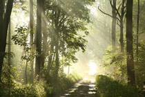 Ein Waldweg im strahlenden Sonnenschein, wo sich der Nebel lichtet