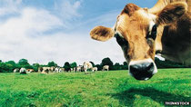 In the future, your beef may come from a printer, not a cow (Credit: Thinkstock)