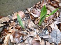 雨水です 庭の春の兆し