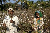 Ökologisch und fair: Anbau und Ernte von Biobaumwolle als Grundpfeiler für nachhaltige Mode. Im Bild eine Anbaufläche der Firma Agrocel in Indien. Foto:EZA Fairer Handel GmbH