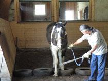 Bodenarbeit zur Föderung von Vertrauen und Trittsicherheit des Pferdes