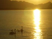 Urlaub rund um Bad Ischl
