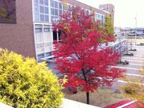 岡崎シビックセンターの紅葉