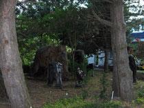 Deze olifanten stonden in een tuin.