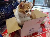 おせちの外箱に入っているサリーちゃん。