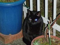 外猫のくろちゃん。必ず待っていてくれます。