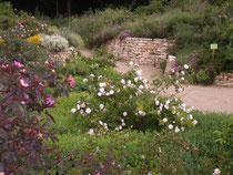 Naturschaugarten Lindenmühle