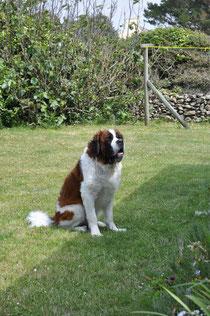 Leo im Garten