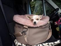 """Das """"Herzstück"""" von Isarhund. Tasche und kuscheliges Körbchen in einem...wir lieben es!"""