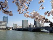 桜と萬代橋(2014/4/13)