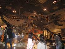 おまけ① 国立科学博物館。ティラノサウルスの化石は迫力もの^^