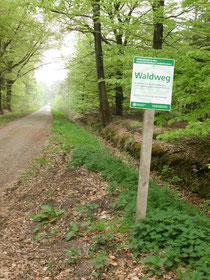 Wanderweg im Schooer Wald