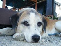 プカプカの癒し犬 バルです